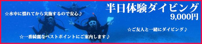 sunfish1