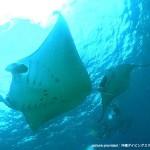 沖縄本島エリア22